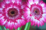 1806_MFA_Flowers_216-Edit
