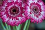 1806_MFA_Flowers_217