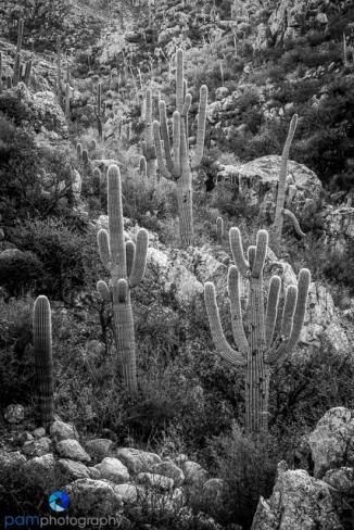 1612_PSA_Tucson_infrared_042