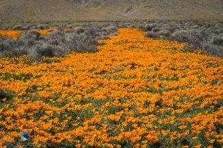 1704_PSA_SoCal Wildflowers_277