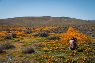 1704_PSA_SoCal Wildflowers_282