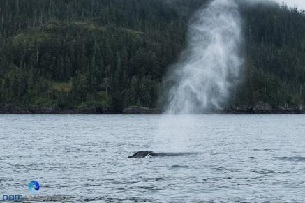 1808_MFA_Alaska_121
