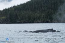 1808_MFA_Alaska_125