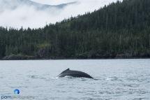 1808_MFA_Alaska_127