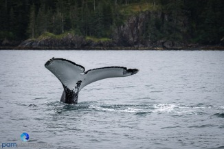 1808_PSA_Alaska_116