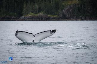 1808_PSA_Alaska_118