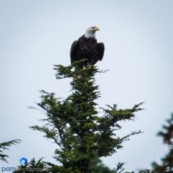 1808_PSA_Alaska_485