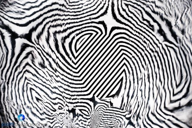 1802_mfa_abstract_133