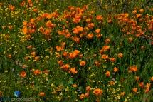 1903_PSA_Southern California_018
