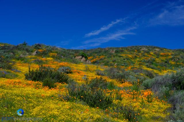1903_PSA_Southern California_036