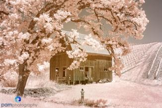 1905_MFA_Oregon_IR_148
