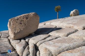 1811_MFA_Yosemite_211