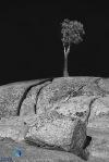 1811_MFA_Yosemite_218-Edit