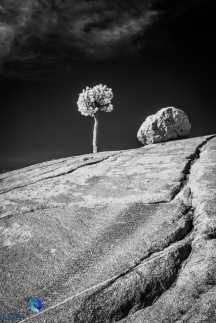 1811_PSA_Yosemite_IR_354-Edit