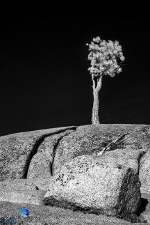 1811_PSA_Yosemite_IR_361