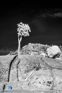 1811_PSA_Yosemite_IR_363-Edit