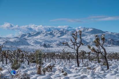 Joshua Tree National Park Pamphotography